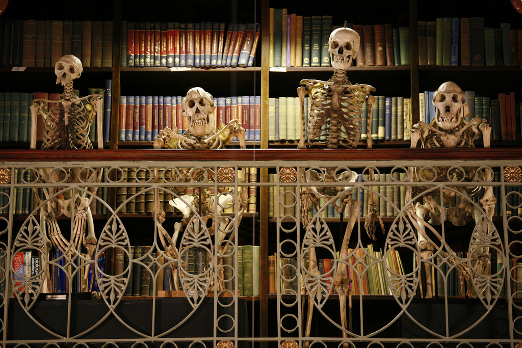 Grant Museum of Zoology Skeletons