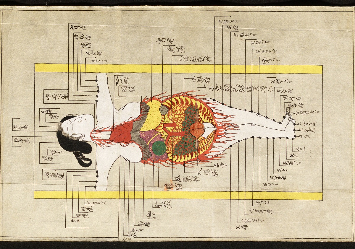 Japanese anatomical scroll, Edo period